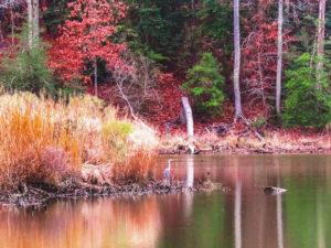 Caledon Winter Marsh by Chris McClintock (CBTC: October 2018)