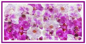 Symphony of Orchids by Victoria McCracken (CBTC: February 2019)