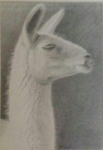 Llama Dude with Attitude by Charlotte Burrill (CBTC: February 2019)