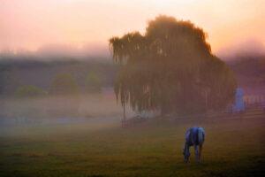 Valley Mist by Addison Likins (CBTC: July 2019)