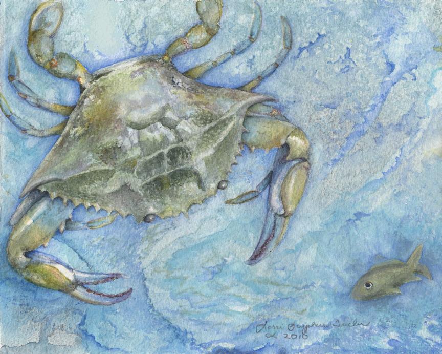 Crab by Lorrie Tucker (MG: June 2014)