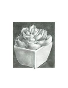 Single Succulent, Graphite by Cedric Harrison, $120 (Aug. 2020-Jan. 2021 CBTC)