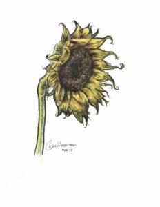 Sunflower, Mixed Media by Cedric Harrison, $100 (Aug. 2020-Jan. 2021 CBTC)