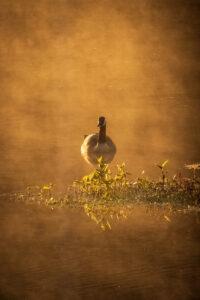 Throug the Mist, Photography by Chris McClintock, $125 (Aug. 2020-Jan. 2021 CBTC)