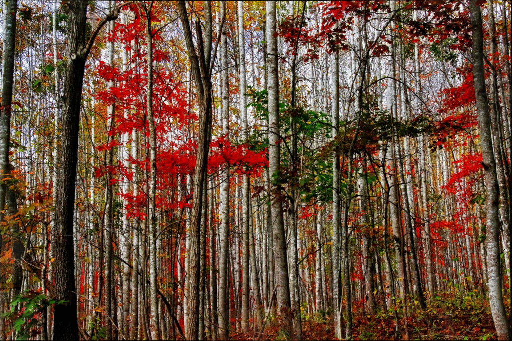 FIRST PLACE: The Grove, Photography by Norma Woodward, 20in x 30in, $225 (Dec. 2020 - Jan. 2021)