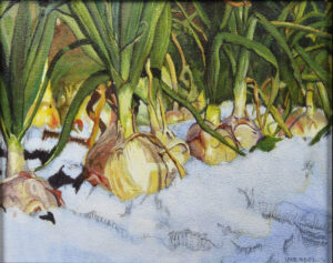Onions in the Snow, Oil by Vicki Meadows, 7.5in x 9.5in, NFS (April 2021)