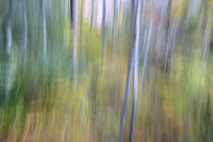 Forest Dreams, Photography by Lee Cochrane, 12in x 18in, $180 (September 2021)