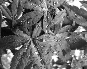 Rain Drops, Digital Photography by Elizabeth Shumate, 11in x 14in, $154 (September 2021)