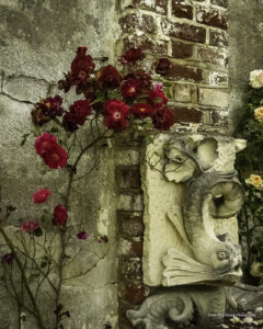 Chatham Roses, digital print on metal by Chris McClintock  (September 2021 CBTC)