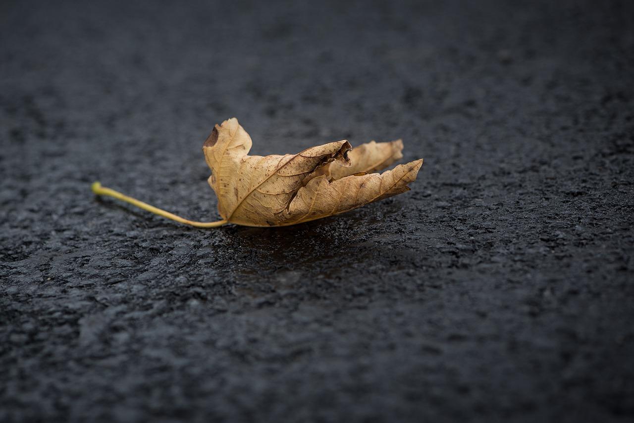 leaf-1845468_1280