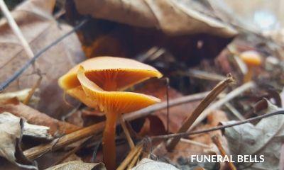 ohio fungi
