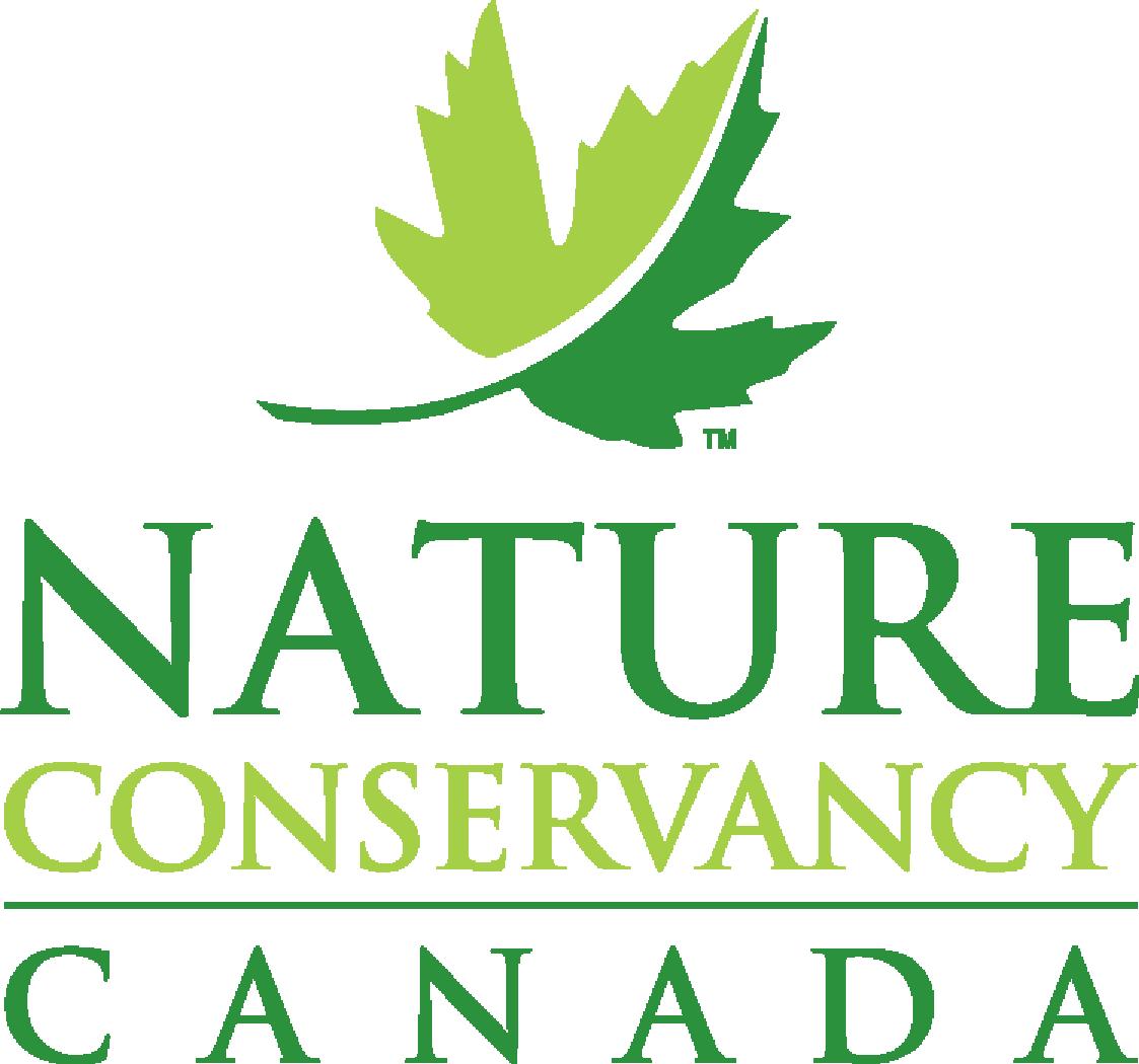 NCC updated logo