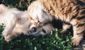 cute dog and cat laying in grass