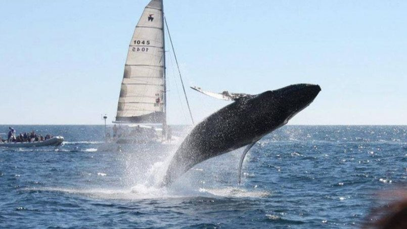 Live the Incredible Experience of Whale Watching in Cabo
