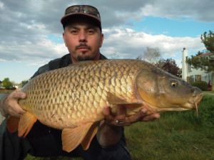 Close view of 20 pound common carp carefully held by Mike Medina.