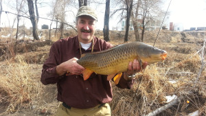 A smiling angler holds a large common carp with downtown Denver in the background.