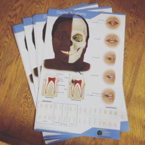 Dental Anatomy Poster