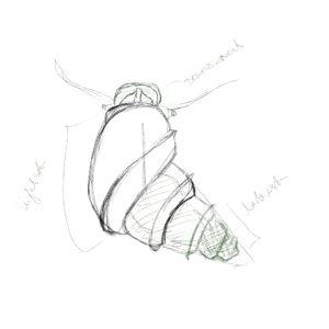 Dextra observation sketch for shell shape, color, and other details