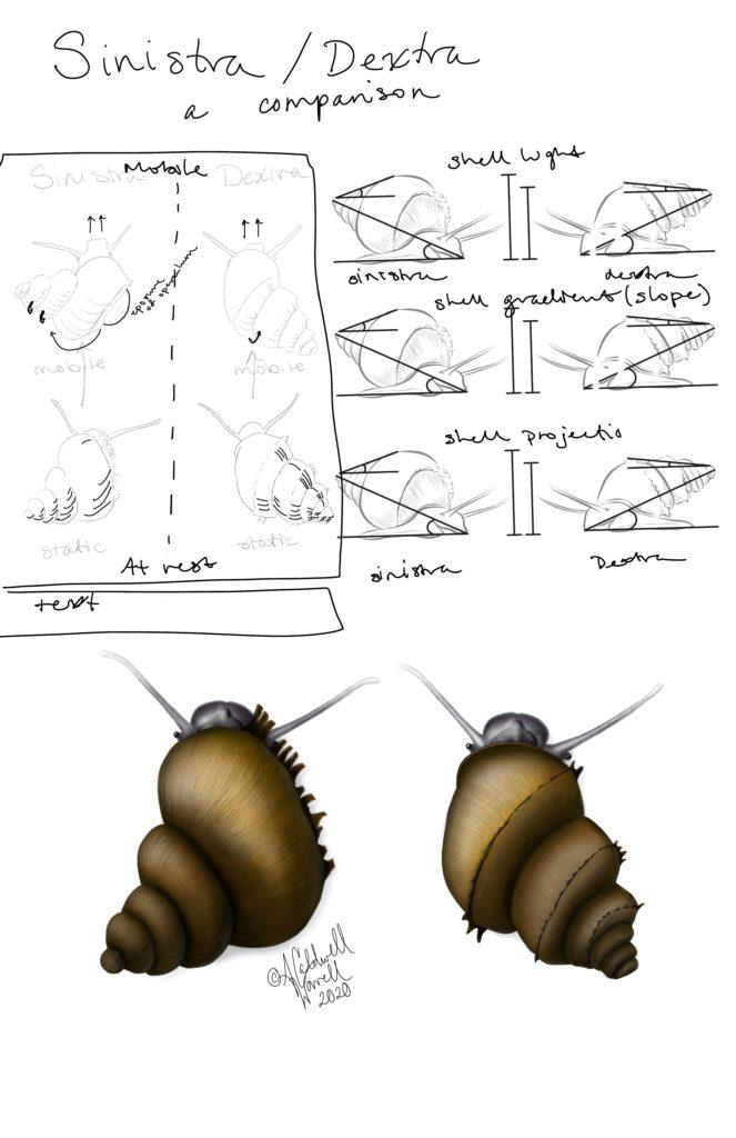 Snail poster layout idea 1