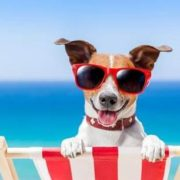 dogwithsunglasses