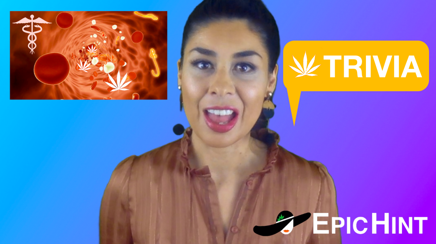How does cannabis interact with the human body?