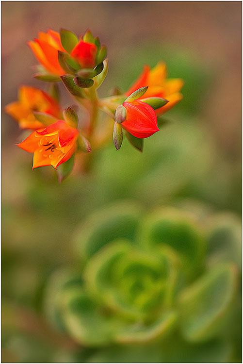 Liliana Hecker - Flowers For Mom - Creative IOM