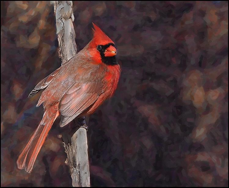 Susan-Silkowitz-Cardinal-On-A-Branch-A-IOM
