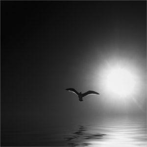 John Scala - Blackbird - A IOM BW