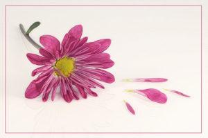 Valerie Interligi - Bloom And Lost Petals - Salon IOM