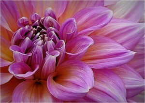 Ken Thalheimer-Purplish Bloom-Color A IOM