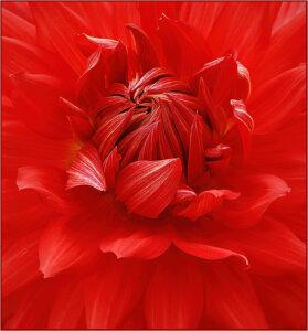Ken Thalheimer - Simply Red - 10 - Color A IOM