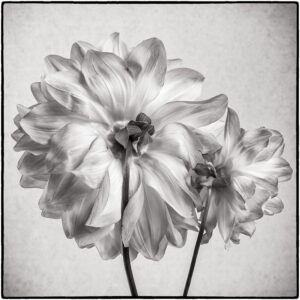 Helen Albano- Looking Back- BW-S- 10 (IOM)