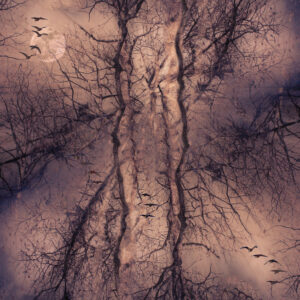 Joanna Gazzola-Creative-The Swamp-9.5 (IOM)