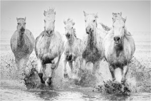 Lorraine Piskin-B&W S-Pierre's White Horses-10 (IOM)