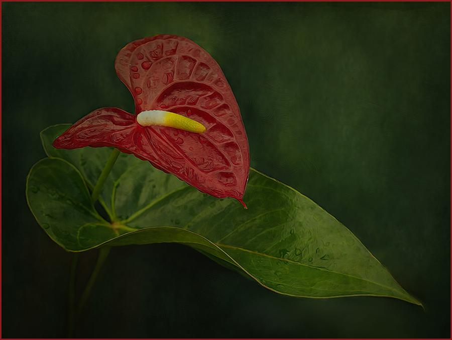 Valerie Interligi-Color S-Red On Green-10 (IOM)