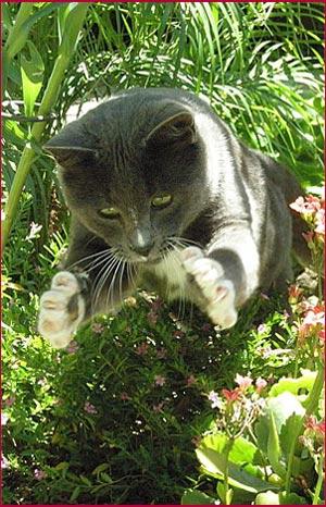 Smokey catching Bee