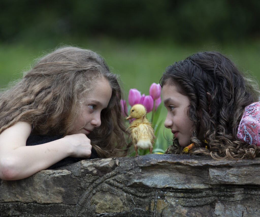 Close up of friends with baby ducklings in Loudoun County