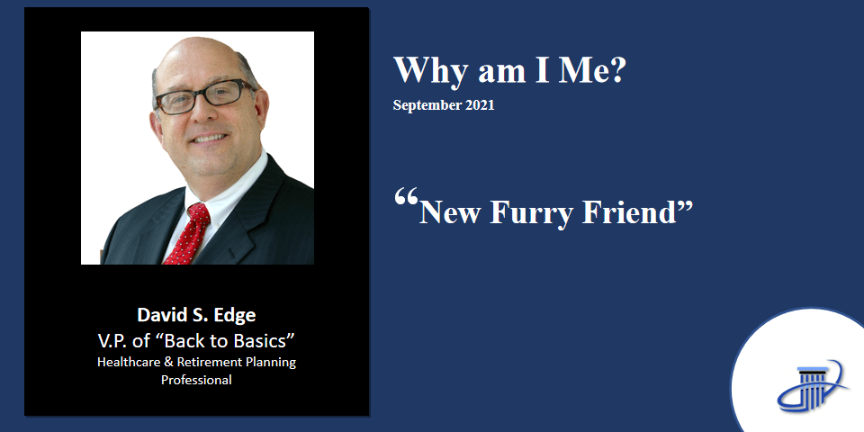 New Furry Friend – 2021
