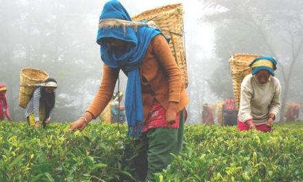 This Nepali Black Tea Tastes Like Honey