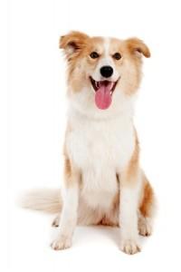 New Mexico Dog pet health
