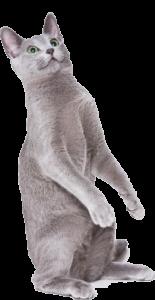 Vet-Co Cat