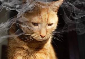 vapor cigarette cat
