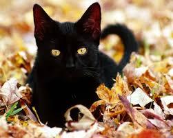 Vetco Pet safety black cat