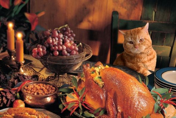 albuquerque thanksgiving