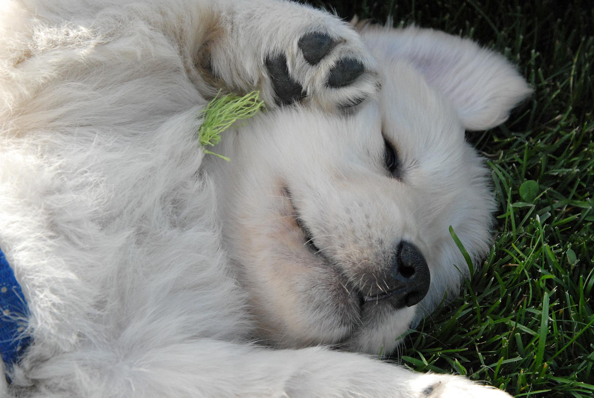 new puppy albuquerque