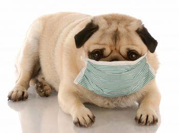 Albuquerque kennel cough