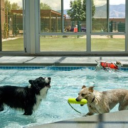pet kennel tips