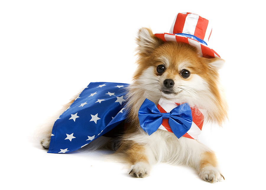 4th of july albuquerque pet safety