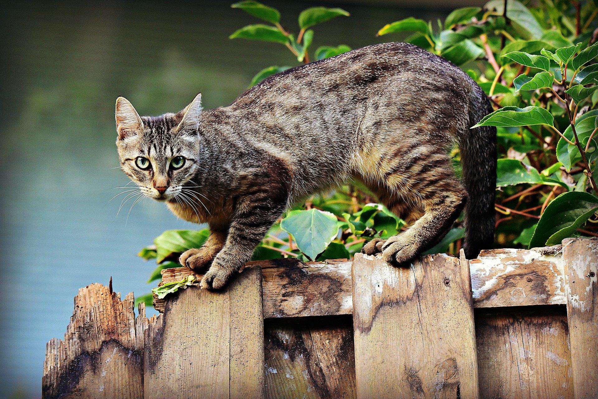 cat spay