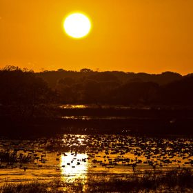 sunrise-ducks